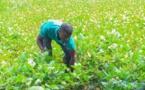 Au Togo, les jeunes et les PME reçoivent le plein soutien de la BAD