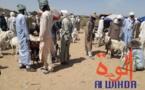 Tchad : Lina, un carrefour pour les marchands de bétail