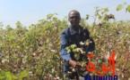 """Tchad : """"La terre n'est pas ingrate comme nous les Hommes"""""""