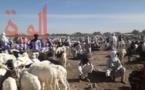 """Tchad : dans les marchés à bétail, les """"fausses taxes"""" jouent sur les prix"""