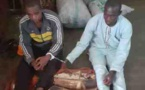 Cameroun/Batouri : Des trafiquants d'ivoire  risquent la prison
