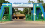 L'Université de Kara a mis au point une technique pour protéger les mangues greffées des insectes nuisibles
