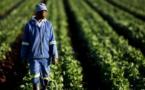 Togo : vers la formation de 1000 entrepreneurs agricoles dans les 117 communes