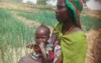 Tchad : des réfugiés apprennent de nouvelles techniques agricoles