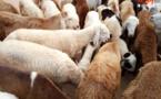 Le bétail du Tchad exporté en Algérie pour le Ramadan ?