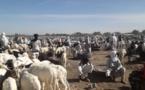 Tchad - exportation de viande : vers un accord avec l'Organisation arabe pour l'industrialisation