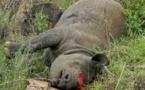 L'Homme, responsable de la disparition de la plupart des espèces animales et végétales