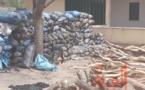 Tchad : 600 sacs de charbon et 5 véhicules chargés de bois interceptés au Ouaddaï