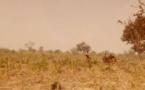 Tchad : enlèvement de 4 personnes dans la sous-préfecture de Lamé