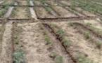Tchad : quelles perspectives pour la campagne agricole 2020-2021 ?
