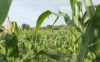 Tchad : production agricole, le gouvernement dévoile un plan de 17 milliards Fcfa