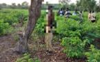 Tchad : des cas de viols et de suicides de plus en plus récurrents