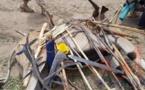 Tchad : deux antilopes chevalines tuées à Kélo, 58 arrestations