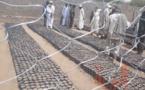 Tchad : en province, une mutualisation d'efforts pour protéger l'environnement