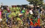 Tchad : 500.000 tonnes de coton d'ici 2025, un objectif conditionné par des défis
