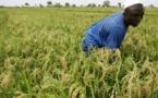 Tanzanie : des producteurs et commerçants des zones rurales triplent leurs revenus grâce à un programme