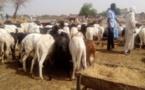 Tchad : hausse des prix de moutons à l'approche de l'Aïd el-Kebir