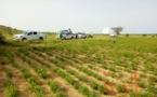 Tchad : au Ouaddaï, une production en hausse pour des bénéficiaires de crédit agricole