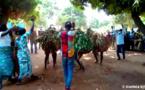 Tchad : la 6ème édition de la fête de la récolte célébrée à Ngorkosso
