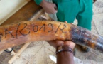 Cameroun/Ambam : Un trafiquant d'ivoire au tribunal