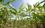 Côte d'Ivoire : 14 millions $ mobilisés en faveur de petits producteurs d'une région du centre