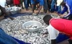 Togo : Plus de 37 000 tonnes de poissons capturés entre 2018 et 2019