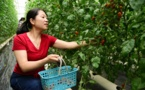 """Zhenjiang in east China builds """"smart brain"""" for vegetable planting"""