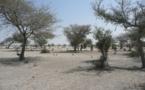 Le projet africain « Grande muraille verte » contre le changement climatique