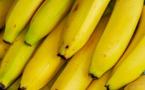 Pénurie de bananes à Dakar : la Côte d'Ivoire vole au secours du Sénégal
