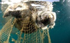 Afrique : trafic illicite des tortues marines, l'espèce toujours en danger