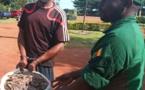 Cameroun : un homme interpellé avec 60 kg d'écailles de pangolin à Dimako