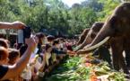 Asian elephants' Sweet home in Yunnan