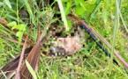 Tchad : le corps d'un nouveau-né découvert dans des buissons à Laï