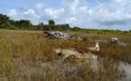Côte d'Ivoire : 5 membres d'équipage d'un hélicoptère tués dans un crash