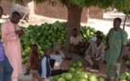 Niger :  les jeunes fixés sur les investissements agricoles de l'État
