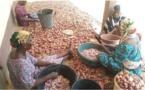 Bénin : un projet agricole renforce la résilience des populations au nord-est