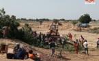 N'Djamena : un déracinement d'arbres entraîne une bagarre pour le bois de chauffe