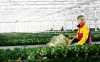 Le secteur de l'agroalimentaire est sur le point d'exploser en Afrique, affirme DHL