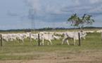 Congo-Sénégal : Macky Sall apprécie l'expérience agropastorale de Sassou N'Guesso