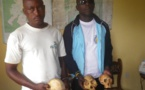 Cameroun: deux frères arrêtés pour trafic d'espèces fauniques