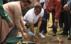 11 ème jeux Africains à Brazzaville : Denis Sassou NGuesso lance  l'opération «  Africa Green Challenge » à Kintélé