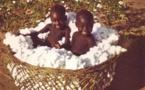 Tchad: Les meilleurs producteurs de coton récompensés