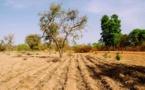 COP21: Des grands projets d'envergure pour sauver les sols d'Afrique