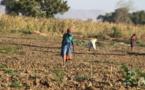 Développement durable, un véritable défis du XXIe Siècle