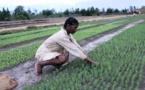 Madagascar : un prêt de la BAD de 1,1 million $ pour financer un programme agricole
