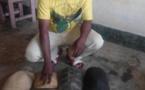 Cameroun : un trafiquant faunique arrêté à Njombe
