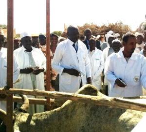 Tchad : vaccination contre la péripneumonie bovine et la peste de petits ruminants à Am-Timan