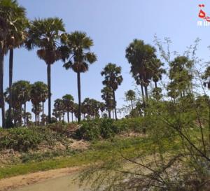 Le Tchad compte 4318 espèces de végétaux supérieurs et 722 espèces d'animaux