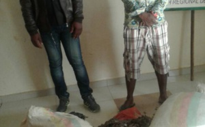Cameroun/Ebolowa : Deux trafiquants d'écailles de pangolins arrêtés