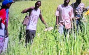 L'AFDS, un tremplin pour l'autosuffisance alimentaire au Tchad.